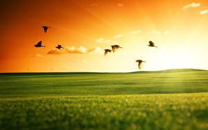 Картинка Поля Луга Птицы Рассветы и закаты Вечер Природа