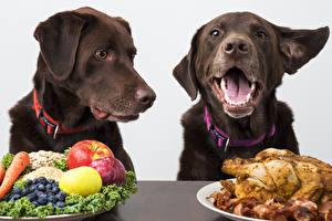 Картинка Собаки Фрукты Курица запеченная 2 Животные
