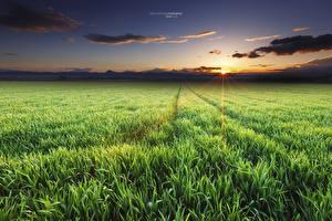 Фотографии Поля Небо Рассветы и закаты Вечер Природа