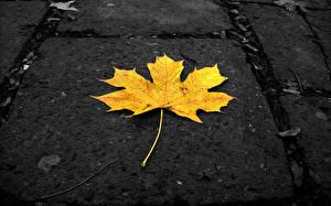 Обои Осенние Листья Клён Желтый