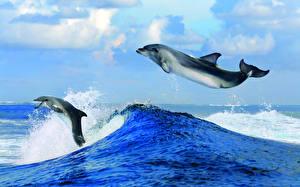 Фотография Волны Дельфины Море Вода 2 Прыгает Животные