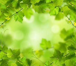 Картинка Листва Зеленые Природа