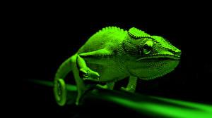 Картинка Хамелеон Зеленые Животные