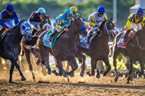 Фотография Лошади Мужчины Верховая езда Бегущая Шлем Животные Спорт