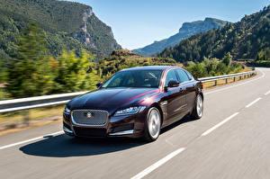 Картинки Гора Jaguar Движение 2015 XF Prstige авто