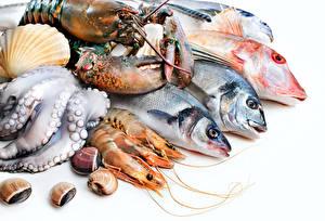 Фото Морепродукты Рыбы Омары Креветки