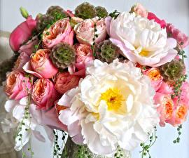 Фотографии Букеты Розы Пионы Цветы