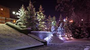 Фотография Россия Зима Снег Ель Ночь Уличные фонари Иркутск Природа