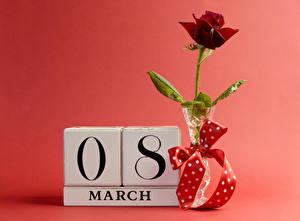 Фотографии Праздники 8 марта Розы Темно красный Бантик Цветы