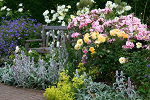 Обои Англия Сады Розы Кусты Rosemoor Gardens Devon цветок