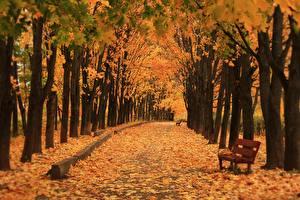 Фотография Осень Парки Аллея Скамейка Дерево Природа