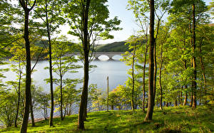 Фотографии Англия Река Мост Лето Дерева Ladybower Reservoir Derbyshire Природа