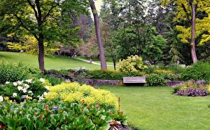 Фотография Канада Сады Дерева Кусты Газон Скамейка VanDusen Botanical Garden Природа