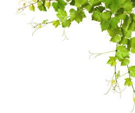Обои Крупным планом Листья Ветки Шаблон поздравительной открытки Природа фото