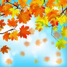 Картинки Осень Листва Клён