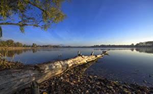 Фото Италия Пейзаж Озеро Небо Ствол дерева Peschiera del Garda Veneto Природа