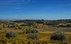 Фотография Пейзаж Италия Поля Небо Кусты Lazise Veneto Природа