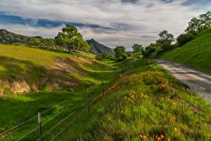 Обои Пейзаж Дороги Мак Небо Трава Дерево Природа