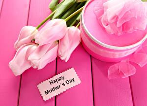 Картинки Праздники Международный женский день Тюльпан Розовые Подарки Цветы