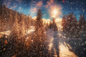 Фото Времена года Зима Леса HDRI Ель Снежинки Лучи света Природа