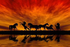 Картинка Лошади Рассветы и закаты Прыжок Силуэт Животные