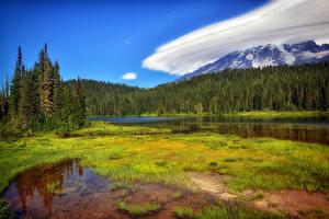 Фото Штаты Парки Пейзаж Леса Озеро Траве Маунт-Рейнир парк