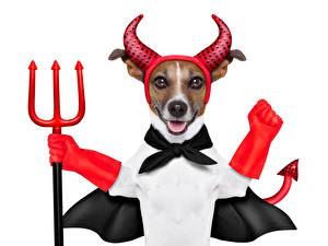 Обои Собаки Джек-рассел-терьер Униформа Трезубца Смешной Животные