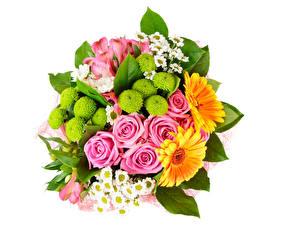 Фото Букеты Розы Хризантемы Герберы Альстрёмерия Белом фоне Цветы