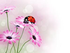 Картинки Герберы Насекомые Божьи коровки Цветы