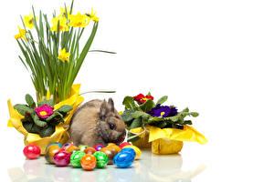 Картинка Пасха Кролик Первоцвет Нарциссы Яйцами цветок Животные