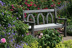Фото Англия Сады Розы Колокольчик Скамейка Rosemoor Gardens Devon Природа