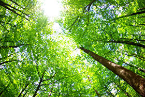 Обои Лето Деревья Ствол дерева Вид снизу Природа фото