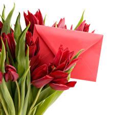 Фото Тюльпаны Бордовый Письма Конверт Цветы
