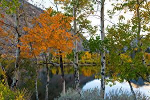 Обои Озеро Осень Березы Ствол дерева Природа фото