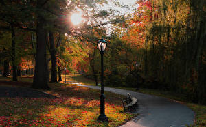 Картинки Штаты Парки Осень Нью-Йорк Деревья Уличные фонари Скамейка Природа