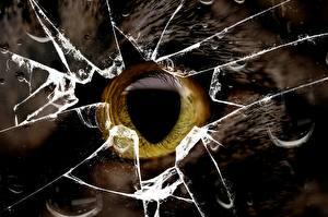 Картинка Глаза Кошки Крупным планом Макро Стекло Животные