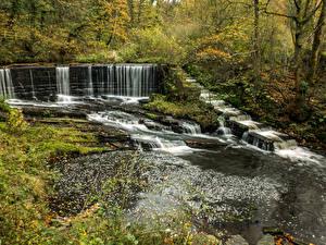 Картинка Англия Парки Леса Водопады Ручей Yarrow Valley Country Park Природа