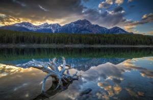 Фотография Горы Побережье Леса Пейзаж Озеро Парки Канада Джаспер парк Patricia Lake Природа