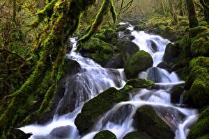 Картинка Швейцария Леса Водопады Камень Мха Ручей Soubey Природа