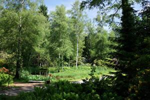 Фотографии Швейцария Парки Деревьев Ель Park Seleger Moor Природа