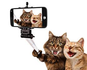 Картинки Кот Две Сматфоном Селфи Забавные Животные