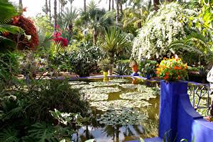 Фото Марокко Сады Плавательный бассейн Пальм Кустов Jardin Majorelle Marrakech Природа