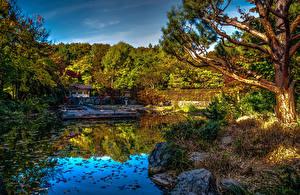 Картинка Германия Парки Пруд Мюнхен Бавария HDRI Деревья Sendling-Westpark Природа