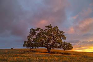 Обои Пейзаж Рассветы и закаты Осень Деревья Трава Природа фото