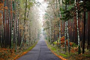 Фотографии Лес Дороги Осень Березы Туман Природа