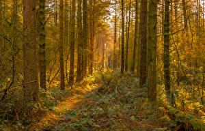 Обои Леса Осень Ствол дерева Трава Деревья Природа фото