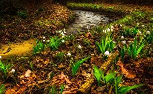 Фотография Весна Ландыши Ручей Природа Цветы