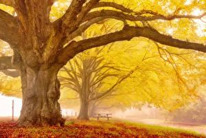 Обои Осень Деревья Ветки Ствол дерева Животные фото