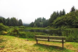 Обои США Парки Озеро Скамейка Трава Redwood National and State Parks Природа