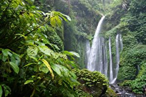 Обои Тропики Леса Водопады Jungle Природа